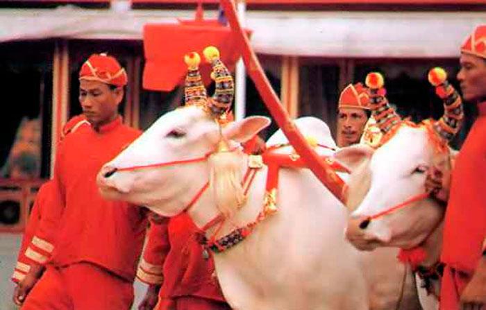 Церемония королевской вспашки в Сиам Луанге