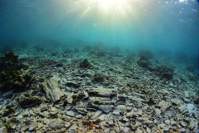 Некоторые рифы придётся восстанавливать искусственно