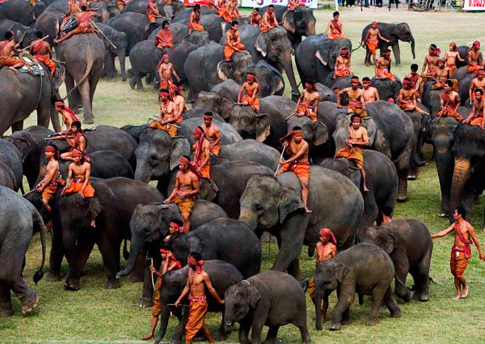 Парад слонов в Сурине