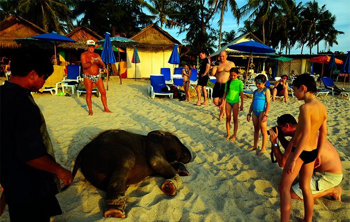 сексуальных туров тайланда часные фото из