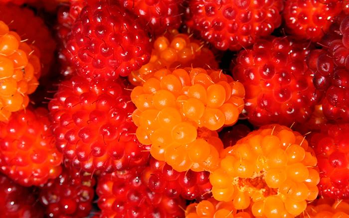 Лососевые ягоды