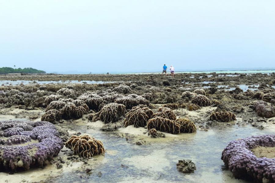 Отлив на Ко Талу в Хуа Хине. Фото The Nation