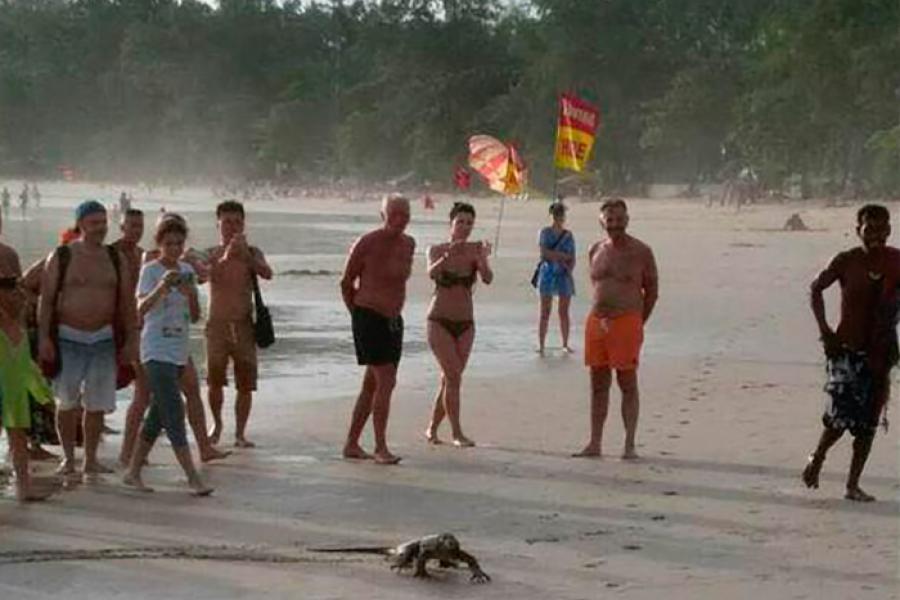 Варан позирует для туристов на пляже Ката в Тайланде   Новости Таиланда